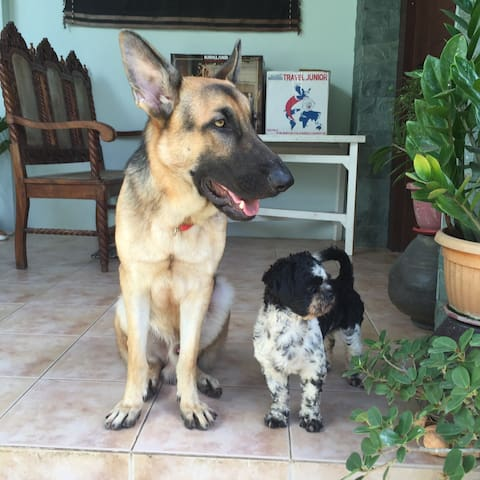 This is Rajah (German Shepherd) & Coco (Shitzu), our two well behaved dogs who love guests & act like they are the hosts.