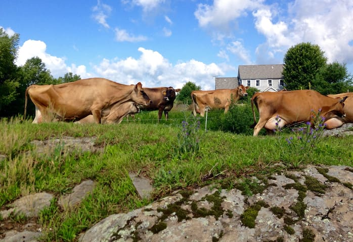 Come stay on a real VT dairy farm!