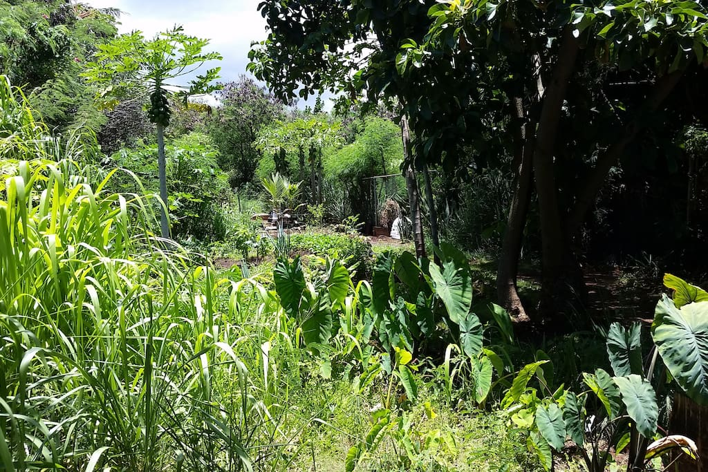 Community garden with private hiking trail to the Market