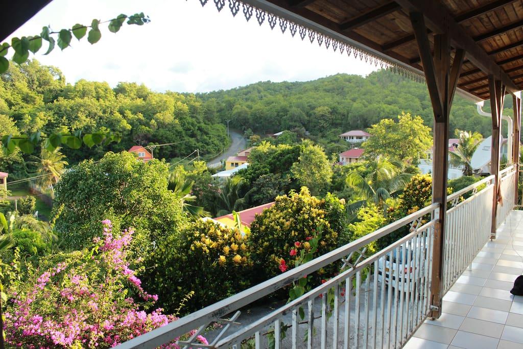 Forêt domaniale vue de la terrasse