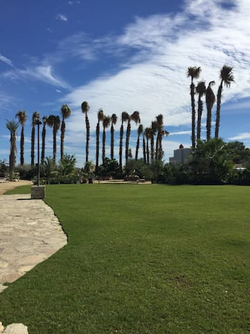 Green Area with Palm Trees