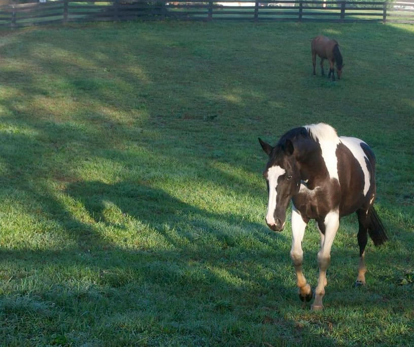 Rodes Farm is surrounded with pastures of horses.
