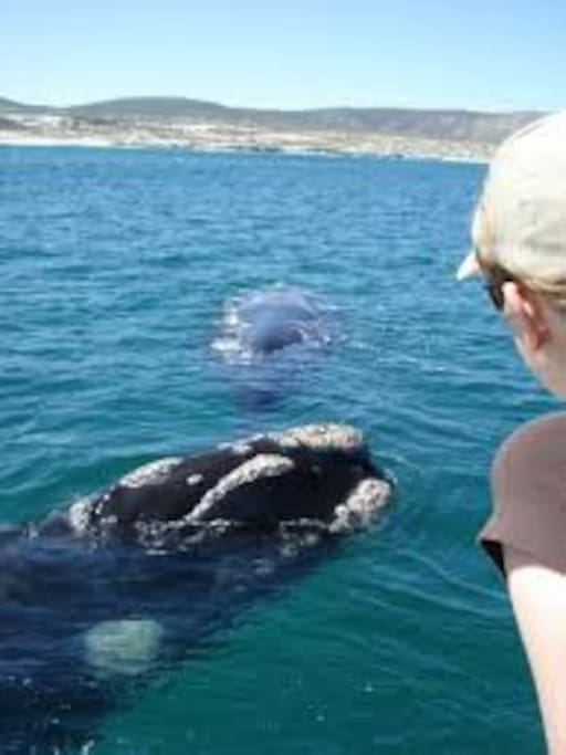 Whales in the bay :)