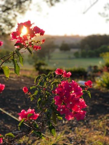 Ourimbah Park Farm: The Hinterlands Green Heart