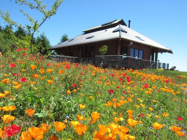Japanese Farmhouse looking towards ocean view.   Springtime wildflowers in front yard