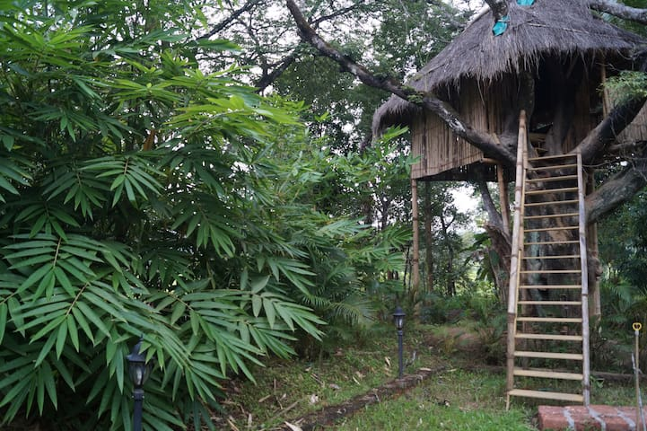 Eco Friendly Bamboo Tree House