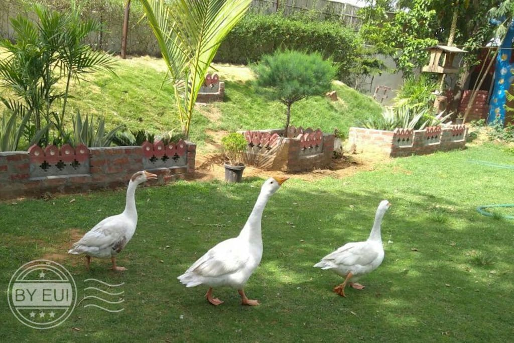 ducks......