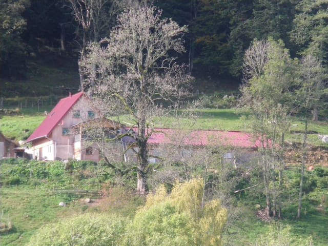 Chambre Les Hirondelles du Im-berg - Metzeral - Ev
