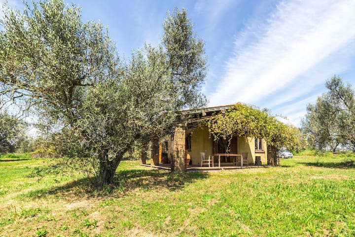 Incredible Organic Olive Farm - Tuscania - Lejlighed