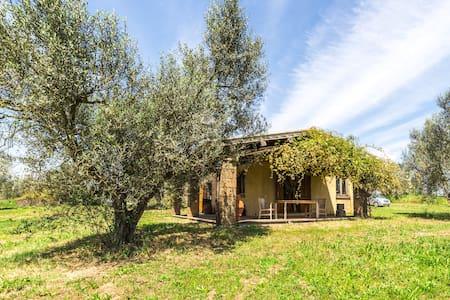 Incredible Organic Olive Farm - Casina Nonna Bis