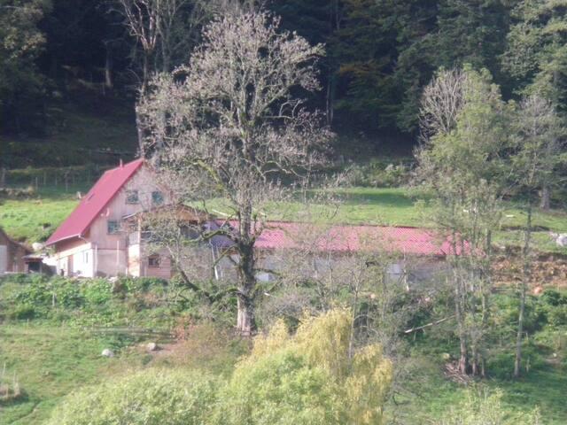 Chambre Pomme de pin du Im-berg - Metzeral - House