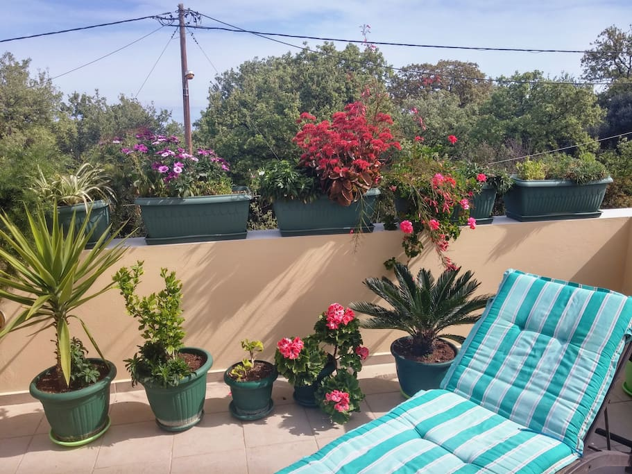Απολαμβάνοντας τον ήλιο στην βεράντα