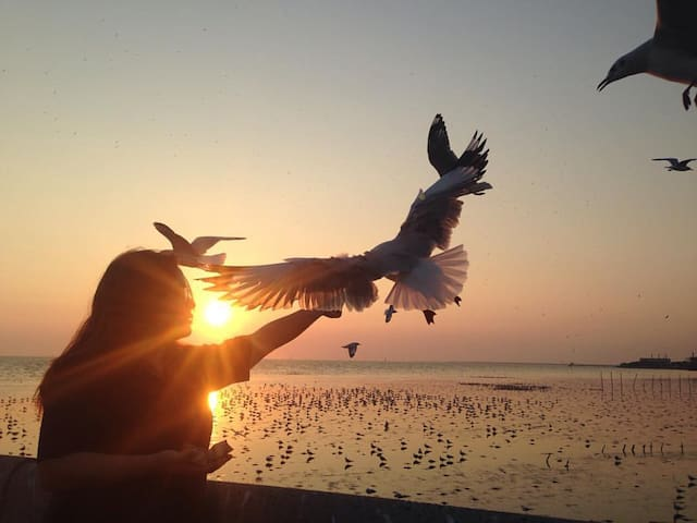 Private Tour to Bangkok's closest sea view and seafood and feed the bird  is available for 600 Baht / 1 person (seafood dinner included)