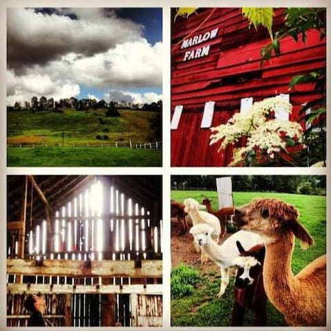 Unique Farmhouse with Alpaca&LLama! - Oxford - Rumah