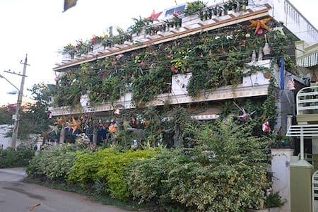 vertical garden, jericho - Mysuru