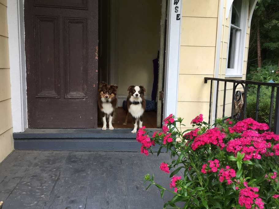 welcoming furry friends