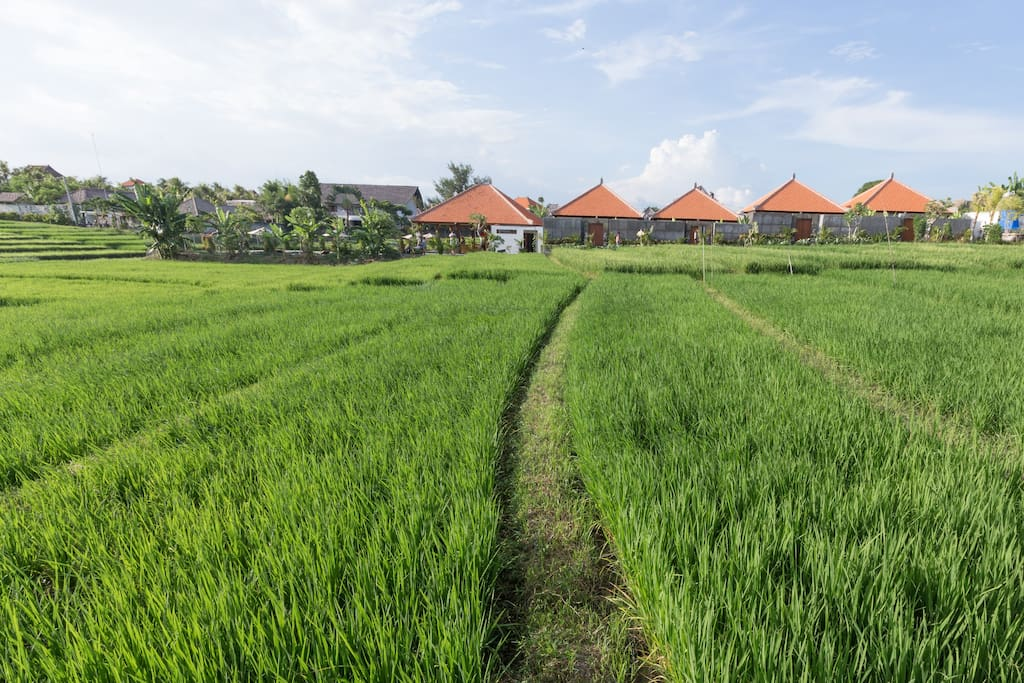 We are located in one of the last sustained rice field in Canggu =)