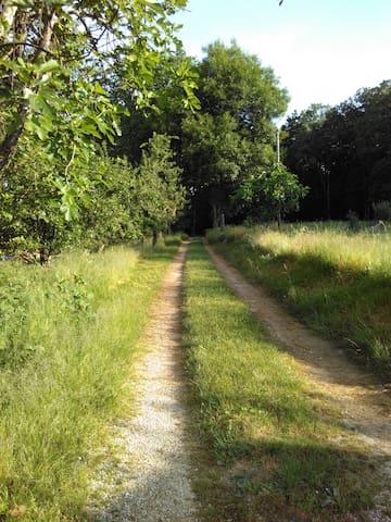 Chemin d'accès au coeur de forêt ...