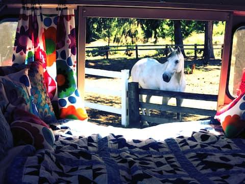ShortBus, Peacocks & Ponies at Corbett Farm