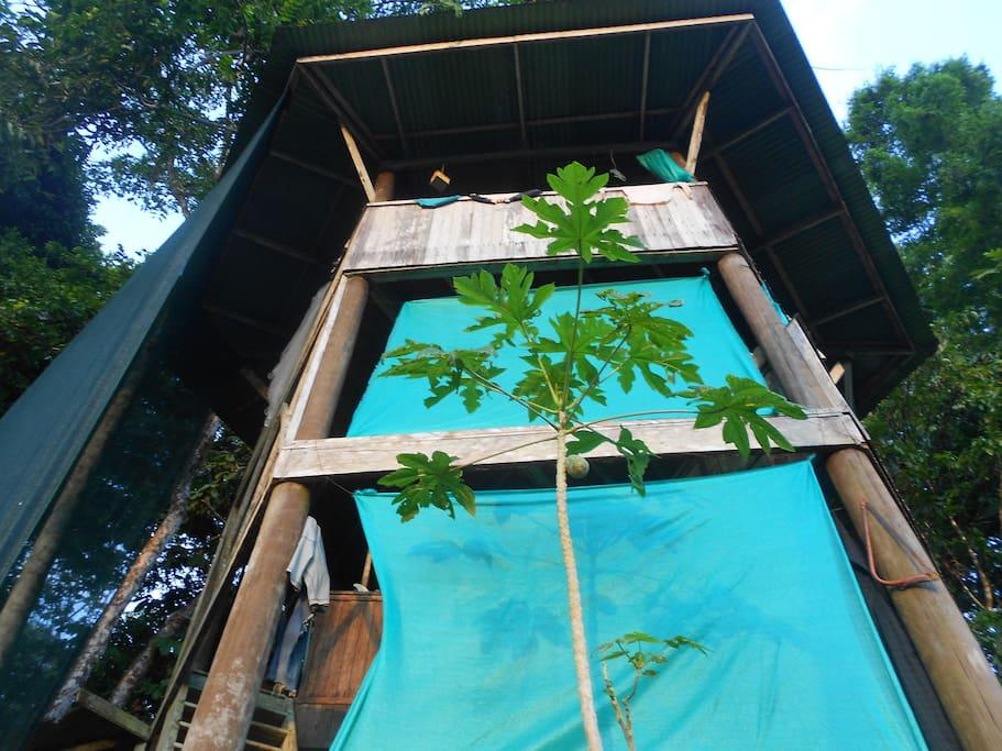 Canopy Tree House...