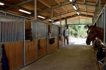 Horse riding school 5 minutes from the house