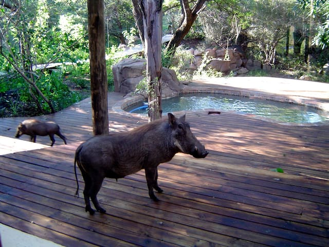 Reverie Safari Lodge, next to Kruger Park