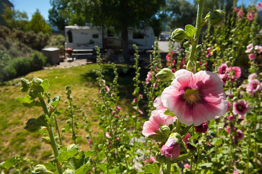 Blossom outside the camper