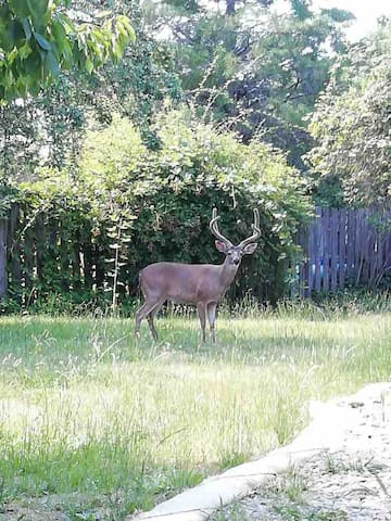 A frequent visitor to our Redway Airbnb to eat the apples in the yard