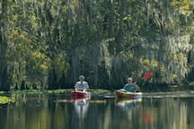 Kayaking on the Wekiva
