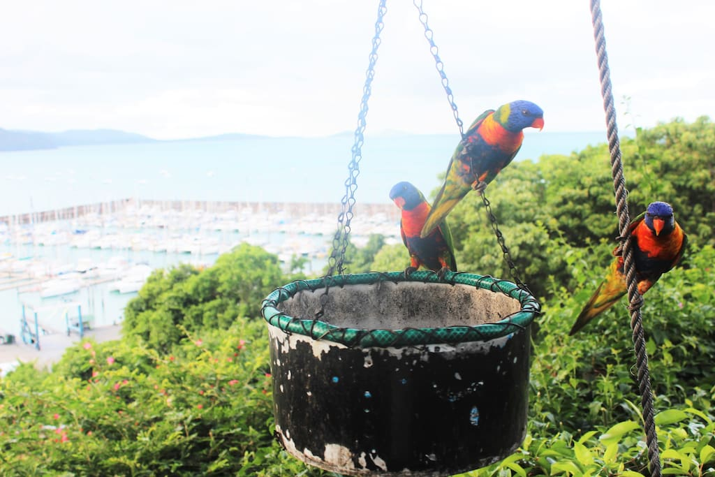 Watch these pretty birds eat and play from your own private terrace in the morning and afternoons surrounded by beautiful rainforest gardens.
