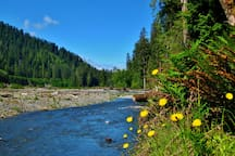 The Hoh river at the Hoh Rain Forest.