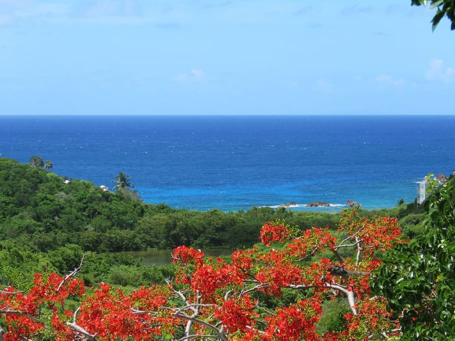 View of Hart Bay