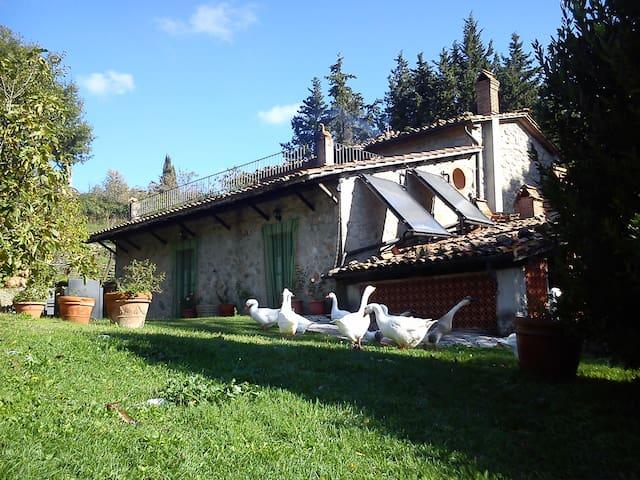 Podere Asche - Santa Fiora - House