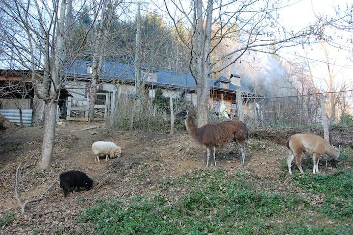 Cosy little house in hobby farm