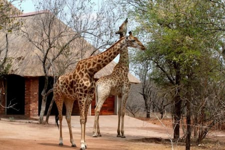 Luxurious Manor, hand feed zebras! - Marloth Park