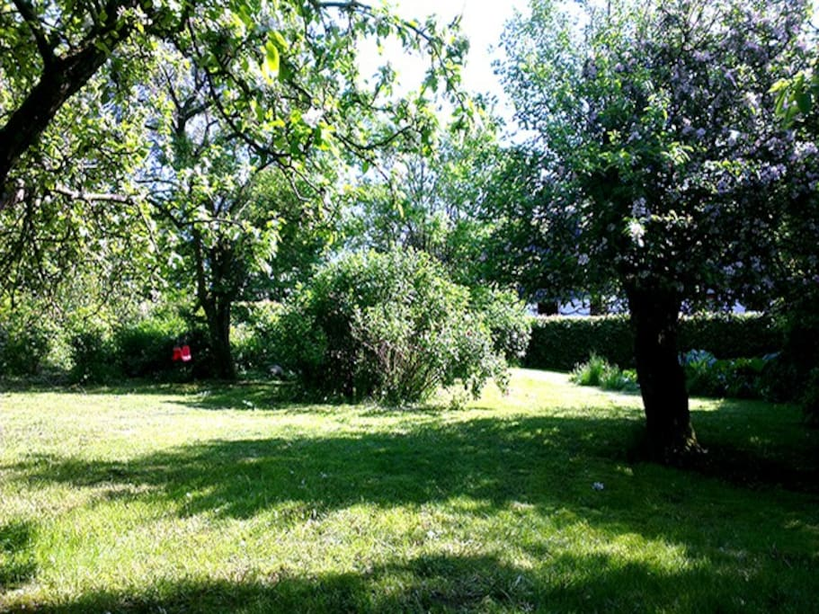 Dejlig ugenert og lukket have