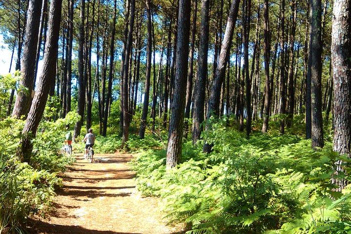 Les pistes cyclables sous les pins. Les sentiers forestiers qui débutent du portillon du camping jusqu'au Lagon.