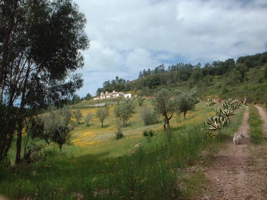 private road to the house Monte cerra da vigia