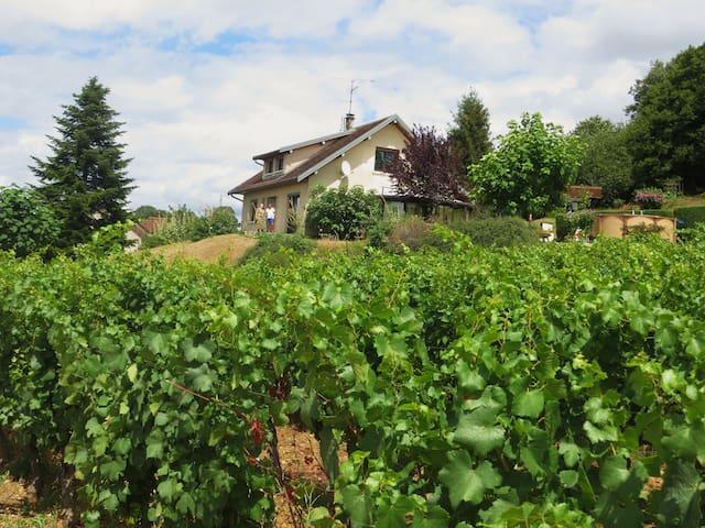 Maison dans la vigne (chambre 2p)