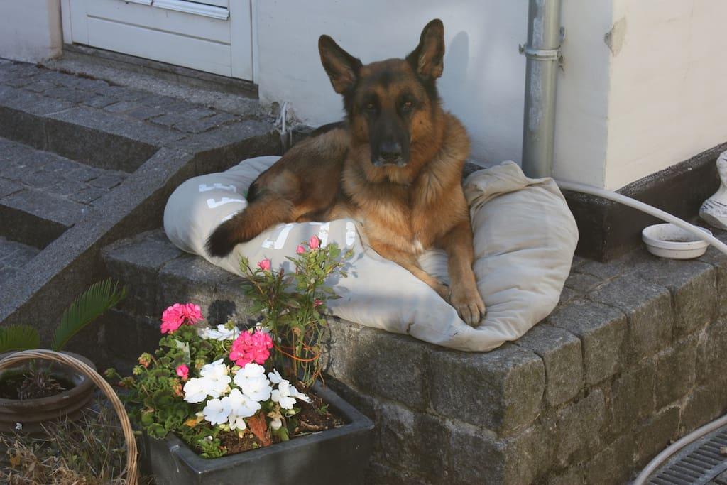 Laigo, min hund.