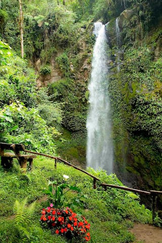 """Lost Falls"" a favorite hiking trail of the Boquete rainforest reserve."