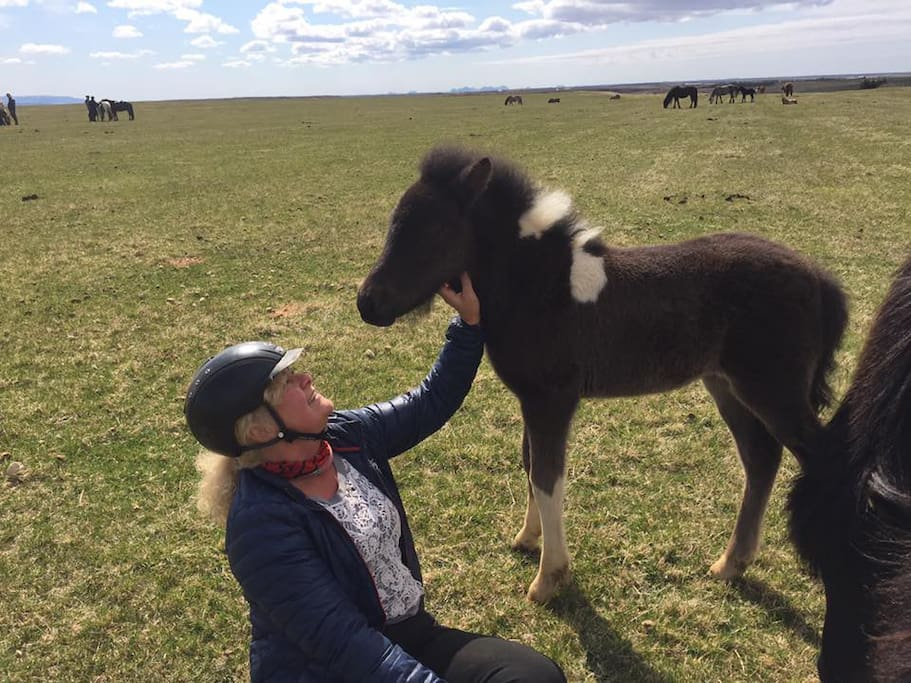 Lea, owner of Kaldakinn Guesthouse with one of many cute foals from the breeding