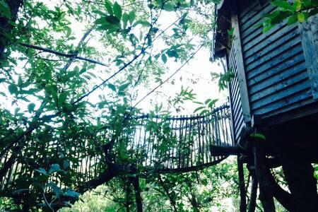Cabane dans les arbres - Saint roman de codieres  - Rumah Pohon