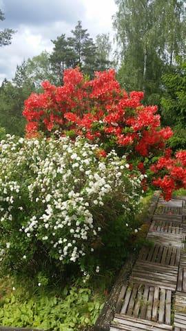 Beutiful Garden. Wild but beutiful:)