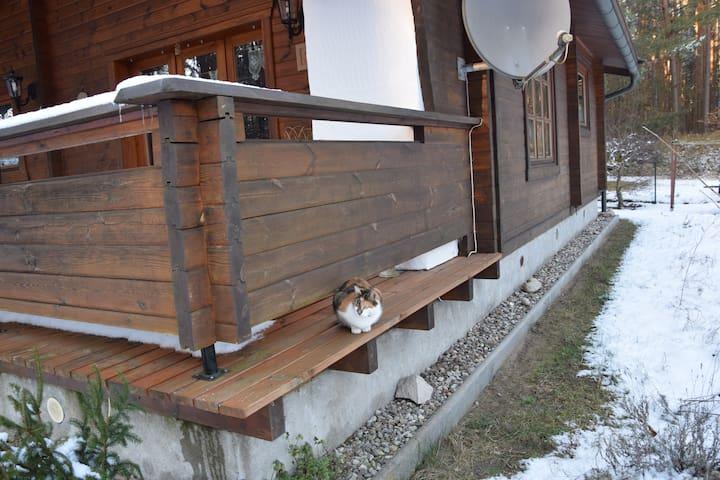 Unsere Katze Findus ist dankbar für jede Schmuseeinheit.