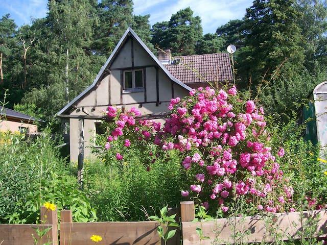 Südzimmer mit Blick auf Garten