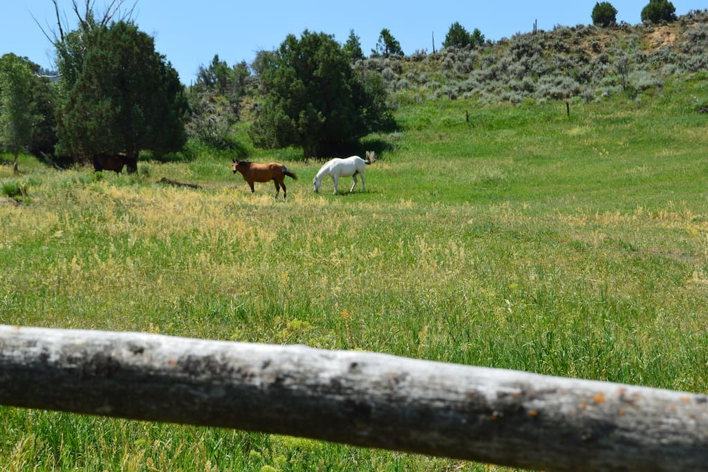 Friendly horses grazing the open pasture