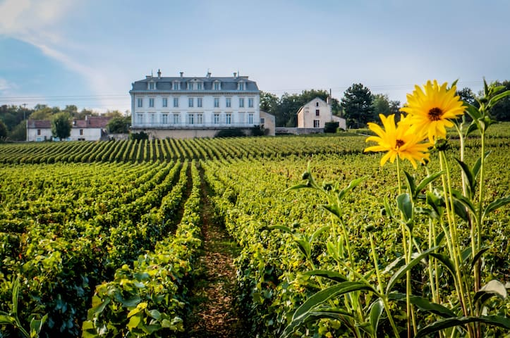45m2 appt Vineyard View in Chateau - Comblanchien - Daire