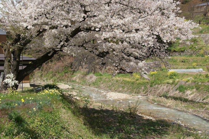 Spring landscape of Wakaho:Hishina river 春の若穂 保科川