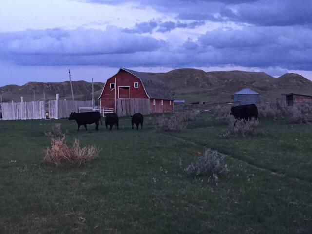 Murdock Ranch Cabin - Malta - Cabin